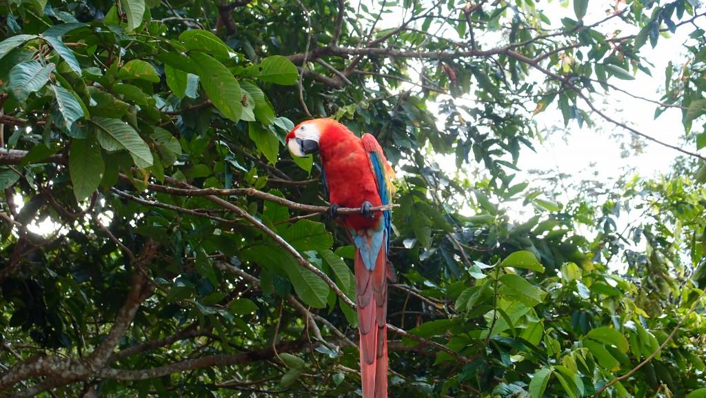 Eldoradonews plonge dans les méandres de l'Amazonie