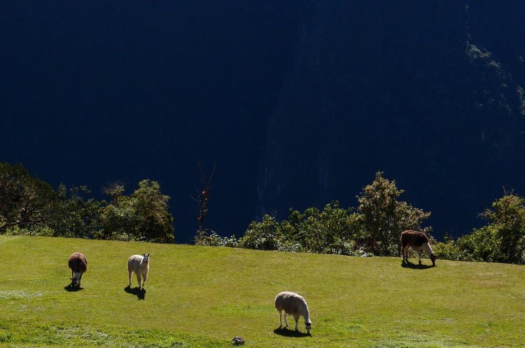 Eldoradonews vous emmène sur les traces du Machu Picchu et de ses légendes
